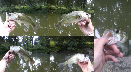 fluke bass2