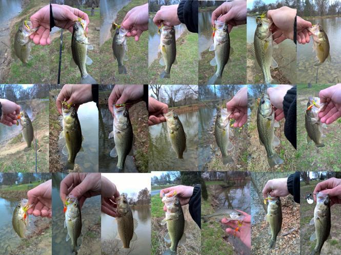 21 bass