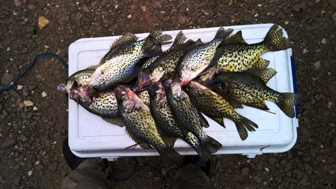 crappies for days