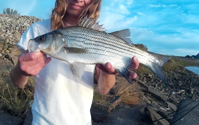striped-bass-woohooo